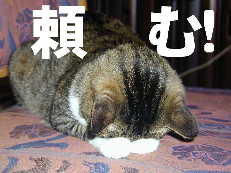 【マギレコ】マギレポ書籍化して欲しいという声がいっぱい\(^▽^)/