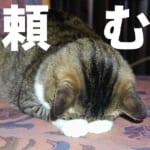 【マギレコ】メモリア枠パンパン…。拡張お願いします!!!